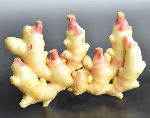 フレッシュ新しょうが4kg詰め・和歌山県産 紀ノ川河口で栽培されている高品質の新生姜を新鮮 産地直送 自家製 甘酢漬け、紅ショウガ、生姜湯、砂糖漬けに