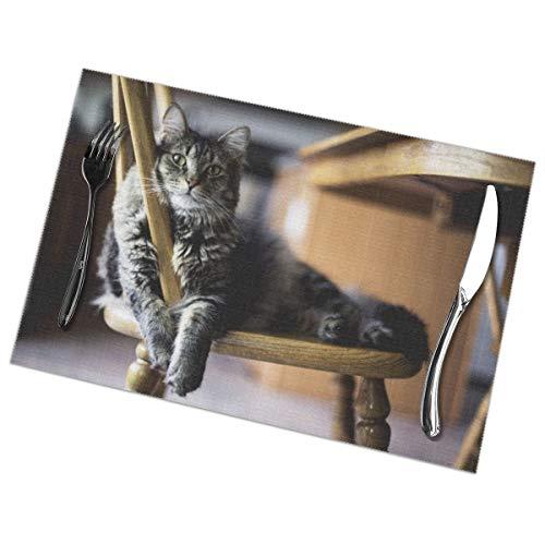 N/A Bruin Tabby Kat Op Houten Windsor Stoel Placemat Wasbaar Voor Keuken Diner Tafelmat, Gemakkelijk te reinigen Makkelijk Te Vouwen Plaats Mat 12x18 Inch Set Van 6