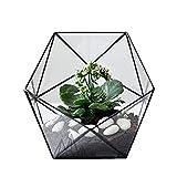 Asvert - Terrario para plantas de terrario (cristal transparente, tamaño pequeño), color negro