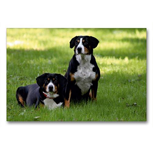 CALVENDO Premium Textil-Leinwand 90 x 60 cm Quer-Format Entlebucher Sennenhunde Emma und Luna, Leinwanddruck von SchnelleWelten