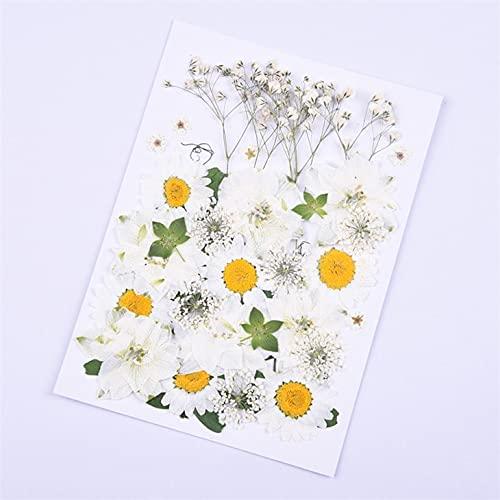 KONGZIR PipiFren Flores prensadas pequeñas Flores secas y litografías Seca Bricolaje decoración de Flores en conserva Inicio Mini Flores de Flores secas (Color : 0.1)