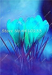 GEOPONICS Semillas: 100 Pcs Freesia Bonsai Plant, No fresia Bulbos flores de las orquídeas de colores Plantación fragante flor de Bonsai magnífico jardín de DIY: h