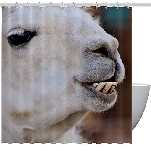 HEOEH Lustiger Tier-Lama-Zahn Stoff Duschvorhang Wasserdicht Badezimmer Polyester Duschvorhang für Badewanne Duschen, 167,6 x 182,9 cm