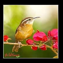 Popular Backyard Birds Calls and Songs