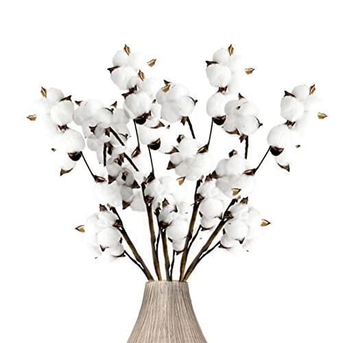 Flores Secas Naturales Blancas flores secas naturales  Marca jiuzcare