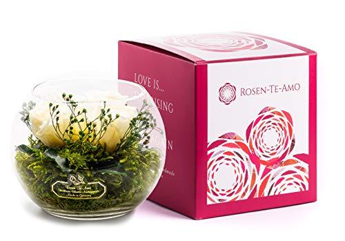 Rosen-Te-Amo Ramo de 3 Flores Blancas conservadas en el jarrón Infinity Rosas en Tarro de Cristal: Hecho a Mano de 100% Verde, Dura hasta 3 años, sin Agua, Cuenco Mediano.