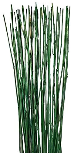 Empire Home Green Natural Thin Decorative Bamboo Sticks About 6 Feet Tall - Pack of 20