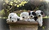 Rompecabezas 1000 Piezas Perros-Cachorro-Viejo-Pastor inglés Juguetes educativos Desafío cerebralJigsaw Puzzle