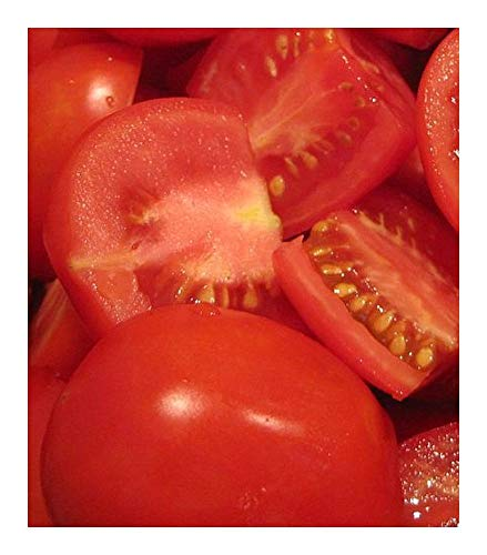 Tomate Roma V F - tomate - 50 graines