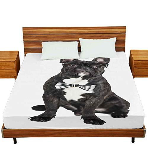 Mattress Protector Twin-XL Size, Dog Breed French Bulldog on a White Isolated Background, Wrinkle Free&Stay in Place Fitted Sheet