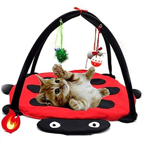 RIRUI Katzenzelt-Haustierspielzeug, Rote KäFer-SpaßGlocke, KatzenhäNgematte Spielzeugkatzenstreu, Faltbar,Red,61 * 61 * 34cm