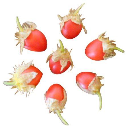 Süße -Litschitomate- 10 Samen (Exot mit hohem Ertrag)