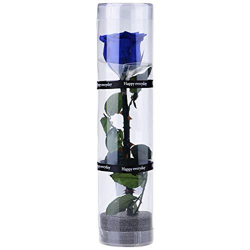 Dewanxin Rosa Eterna,Rosa Natural Preservada,para Decoración del Hogar Boda San Valentín Día de la Madre Navidad Aniversario Cumpleaños - Roja (Blue)