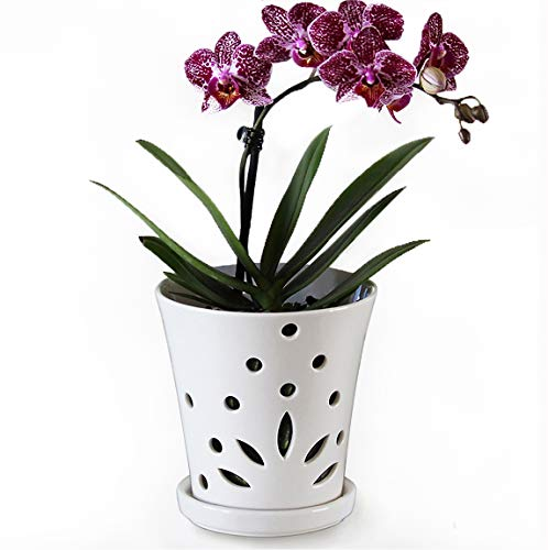 "Ceramic Orchid Pot with Holes – 4.6"" Small Decorative Flower Pot with Drainage Hole and Saucer Promotes Aeration and Deters Over-Watering to Ensure Beautiful Blooms(5"" H x 4.625"" W Top and 3"" W BTM)"