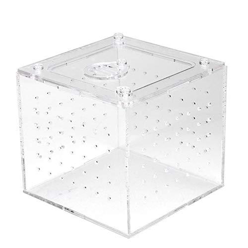 Transparente Reptile Insect Viewing Box, Aufbewahrungsbox für lebende Lebensmittel Acryl-Reptilien-Zuchtbox für Spinnengrillen Schnecken Einsiedlerkrebse Vogelspinnen Geckos 3,9 x 3,9 x 3,5 Zoll
