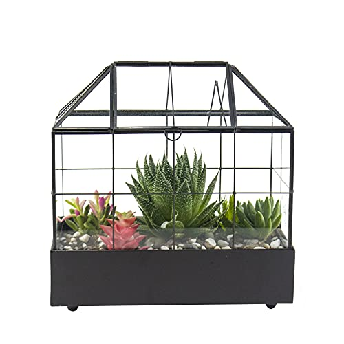 """Large Tall Plant Terrarium Glass – Glass Greenhouse Terrarium with Lid and Tray,Indoor Tabletop Orchid Succulent Cacti Terrarium Kit 9.5""""X9.8""""X5.6"""" NA (Black C)"""