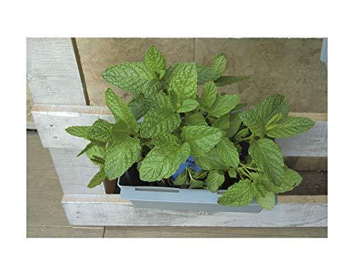 GREEN AT HOME: Kit de 9 Jardineras para Colgar en Palets y Barandillas. para Plantas y Flores de Jardín, de Interior o Exterior, Hierbas Aromáticas. Naturaleza en tu Hogar