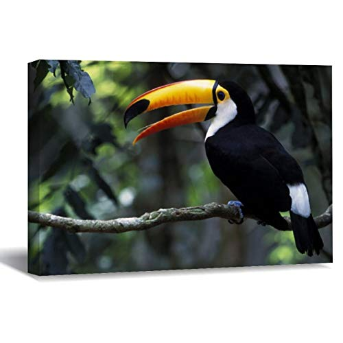 Toco Toucan (Ramphastos Toco), Iguazu Falls Canvas Picture Painting Artwork Wall Art Poto Framed Canvas Prints for Bedroom Living Room Home Decoration, Ready to Hanging 8'x12'
