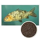 Ultra KOI – Premium forro schWIMMEND para Kois y peces de estanque – Alimento completo para peces koi, alimento para peces acuarios y estanques – Granulado – Pienso para todo el año (3 mm, 1 kg)