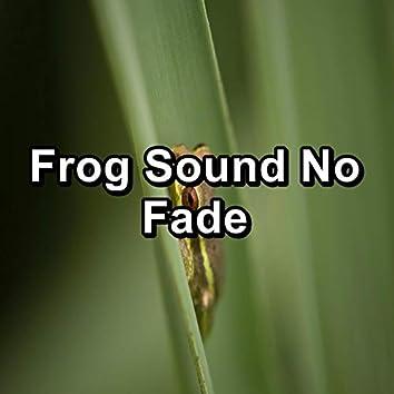 Frog Sound No Fade