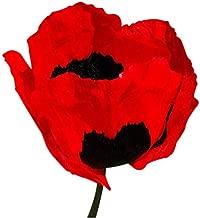 Best red oriental poppy Reviews