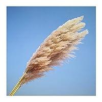 ビッグパンパス草の結婚式のクリスマスショップウィンドウの装飾20個の自然な乾燥リードショーケース本物の工場1M-1.2m (Color : 20 pcs big pampas)
