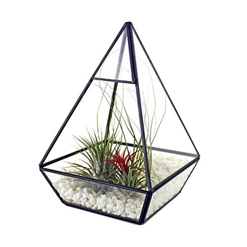 SNIIA Moderne DIY piramide glas geometrisch terrarium Tablet op vetplant Display Box Helder Open Decoratieve plantenbak Farn Mos Bloempot 20 cm