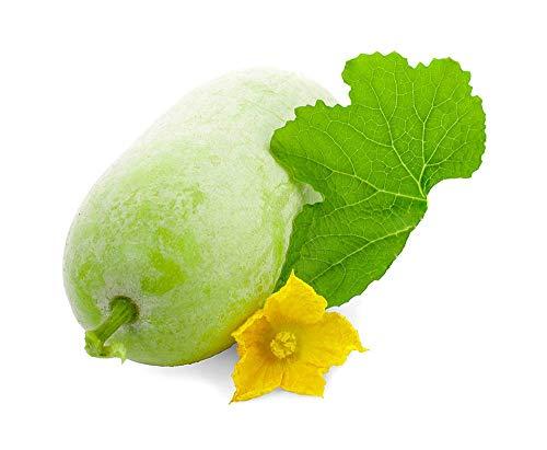 Melone invernale 50 semi di cera zucca peloso tondo tong giardino ortaggio biologico cinese semi di...