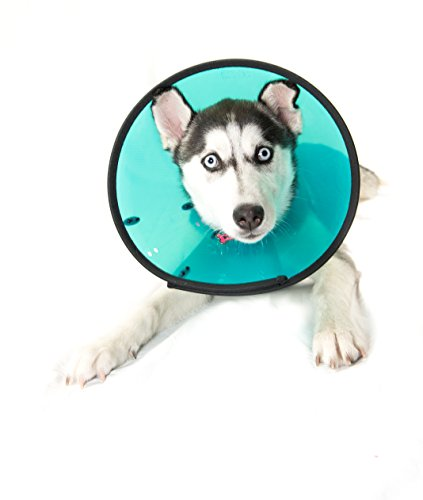 Company of Animals Smart Collar