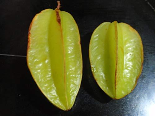 Sternfrucht Karambole (averrhoa carambola) 2 Samen