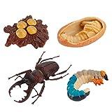 TOYANDONA 4 piezas números del ciclo de vida de colegios biología ciencia, modelo juguetes cifras educativos educacionales, evolución, juguete para niños