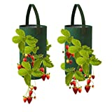 Pri Gardens Hanging Strawberry Planter for Strawberry Bare Root Plants (Roots not Included) Felt Material 2 Pack, Improved for Spring 2020