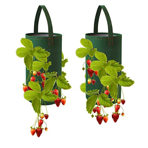 Pri Gardens Hanging Strawberry Planter for Strawberry Bare Root Plants...