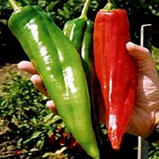 NuMex Big Jim Chili Pepper Seeds ► Organic NuMex Pepper Seeds (10+ seeds) Award Winning 12+ inches long! ◄ by PowerGrow System