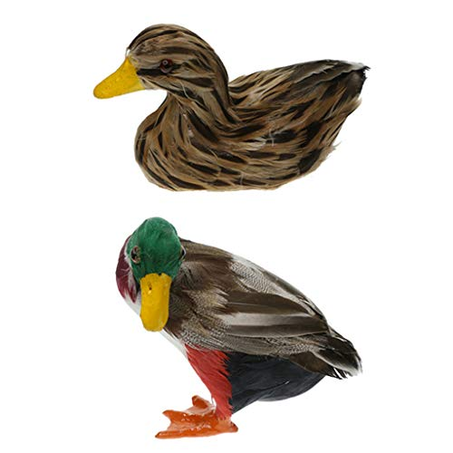 Flottant canard colvert paire pond decor