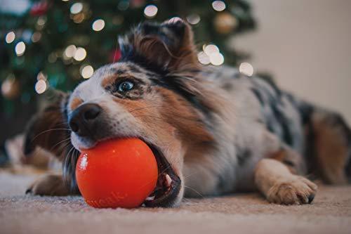 Planet Dog Orbee-Tuff Squeak Ball