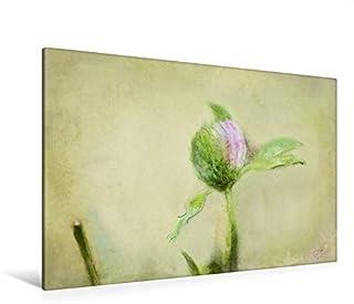 Premium - Lienzo de tela (120 x 80 cm, horizontal, trébol floral, imagen sobre bastidor, lienzo auténtico, impresión sobre lienzo: pinturas fotográficas (CALVENDO);CALVENDO Arte