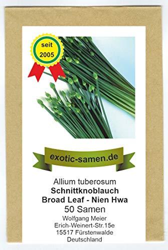 Schnittknoblauch - winterhart - Ky Broad Leaf - Nien Hwa - (50 Samen)