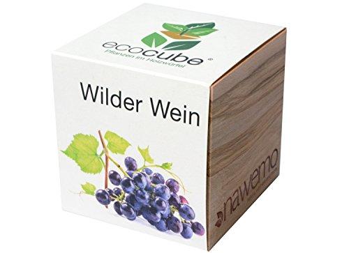Ecocube Wilder Wein im Holzwürfel