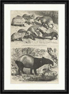 Kunstdruck Der Schabrackentapir im Zoologischen Garten zu Berlin Mützel Tiere Faksimile_E 13446