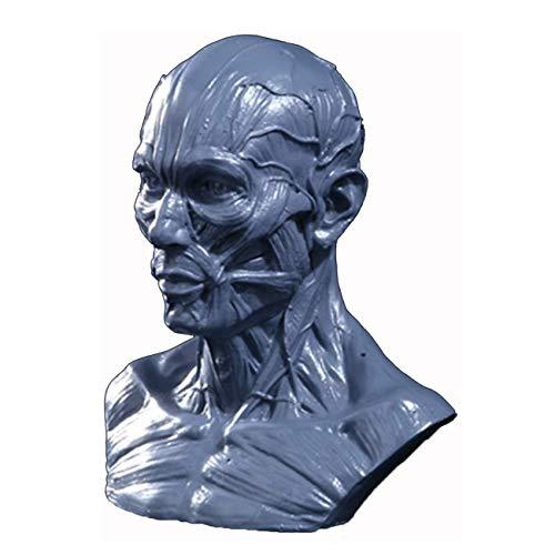 TIESALUONI Muscular anatómica Cabeza Humana Cráneo Modelo de Resina Artesanal Arte Pintura Modelo de Referencia para el Arte de la Pintura Educación Ayuda