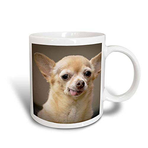 Chihuahua sin dientes, Santa Fe, New México-US32 JMR0502-Julien McRoberts Magic Transforming Mug, negro/blanco