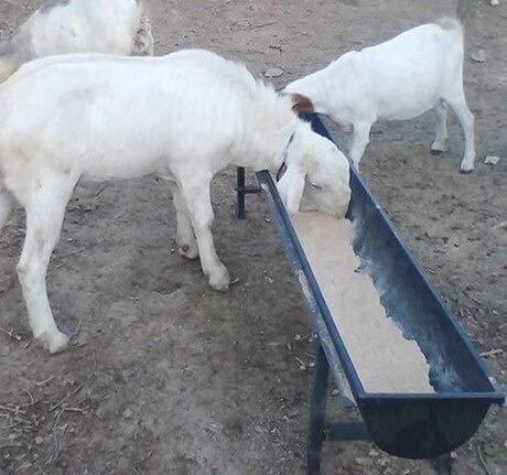 MQEIANG 12 Piezas de Granja Alimentación Animal Trough for los ovinos Canal alimentador Trough Cuenco de Agua Potable for Bebedor ovejas Cabra Cordero Ternero (Color : Sheep Feed Trough, Size