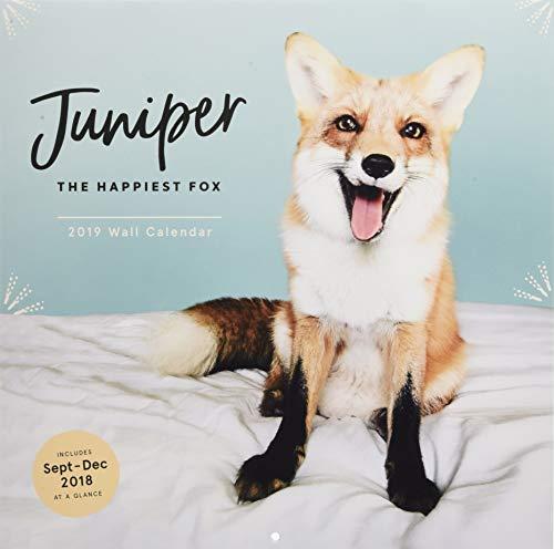 2019 Wall Calendar: Juniper: The Happiest Fox