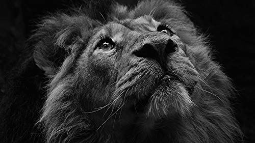 Animal Modern Art Black and White Animal Lion Canvas Painting Poster Print Mural Picture Room Home Decoration