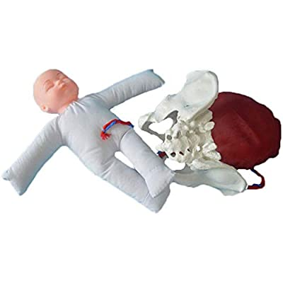 DDT Midwifery Training Model Wiht Female Pelvis And Baby Childbirth Model Delivery Birth Simulation Human Body for Gynecology Teaching by DDT