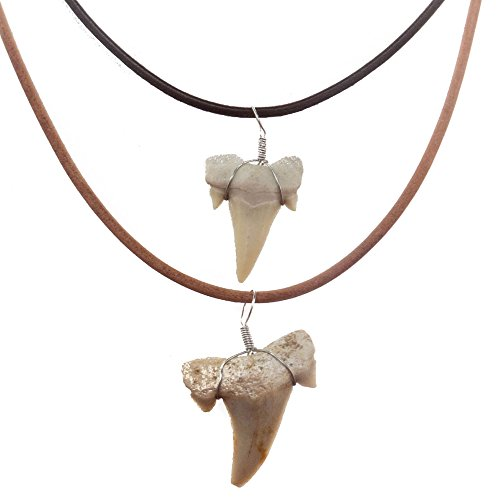 FROG SAC Real Shark Tooth Necklace for Men Boys Teens covid 19 (Fossil Leather Necklace coronavirus)