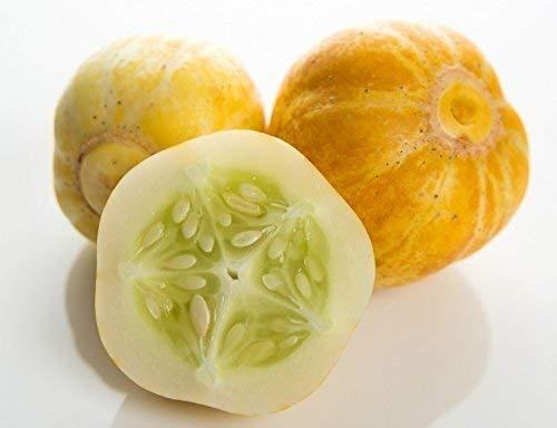 Gelbe Gurke \'Crystal Lemon\' Zitronengurke - 20 Samen