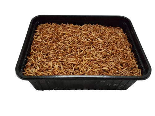 Buffalowürmer gefroren 500g 1000g 250 g 500 g 1 kg | Aufzuchtfutter z.b für Schwalben Mauersegler (1000g)