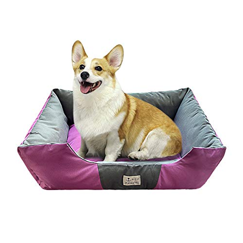 DZL- Lettino per cani e animali domestici, base rimovibile e rimovibile, regalo per cani e gatti, tappetino per animali domestici (M-50 x 62 x 18 cm, viola)